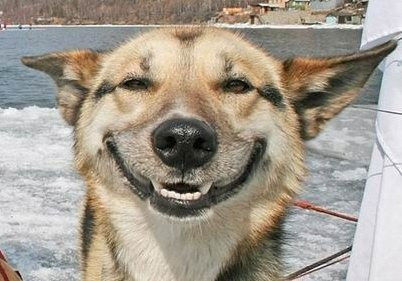 smiling happy dog